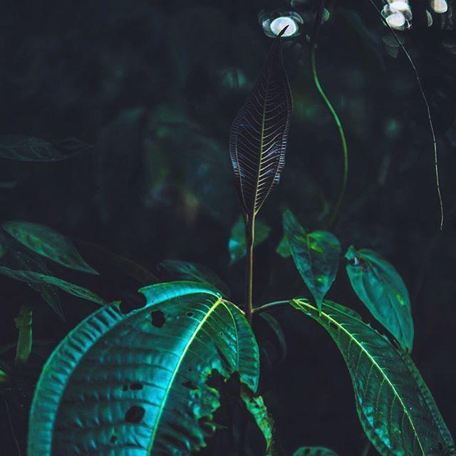 Morning sunrays 🌴🌿🌱 Misty cloud forest, Ecuador #travel #traveling #Photography #Travelphotography #landscapephotography #landscape #instatravel #instago #mistyforest #ecuador #photooftheday #traveling #travelling #südamerika #southamerica #instatraveling #mytravelgram #travelgram #landscapes #reiseblog #travelblog #travelblogger #photographer #südamerikablog #documentaryphotography #exploretheworld #exploringtheglobe #cloudy #beautifulnature #cloudforest