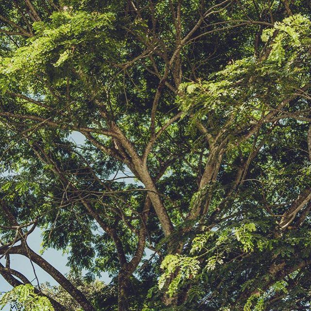 🌿🌿🌿 #travel #traveling #Photography #Travelphotography #landscapephotography #landscape #instatravel #instago #forest #ecuador #photooftheday #traveling #travelling #südamerika #southamerica #instatraveling #mytravelgram #travelgram #landscapes #reiseblog #travelblog #travelblogger #photographer #südamerikablog #documentaryphotography #exploretheworld #exploringtheglobe #nature #beautifulnature #naturephotography