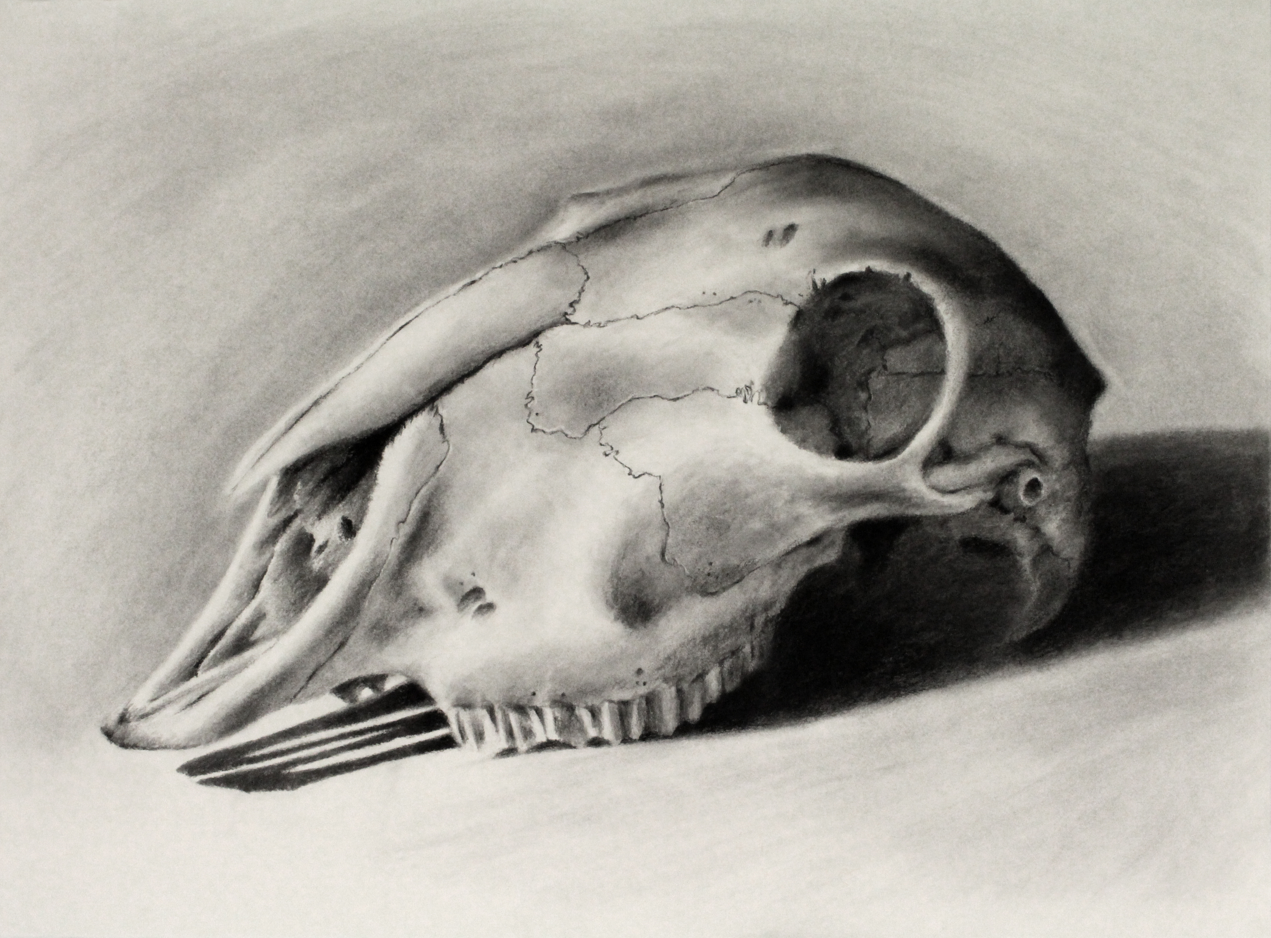 Charcoal on Paper (56x76cm)