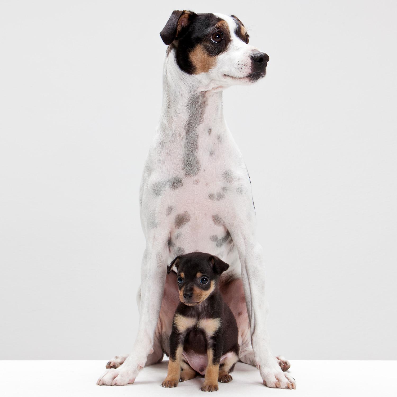 DOG - Portraits