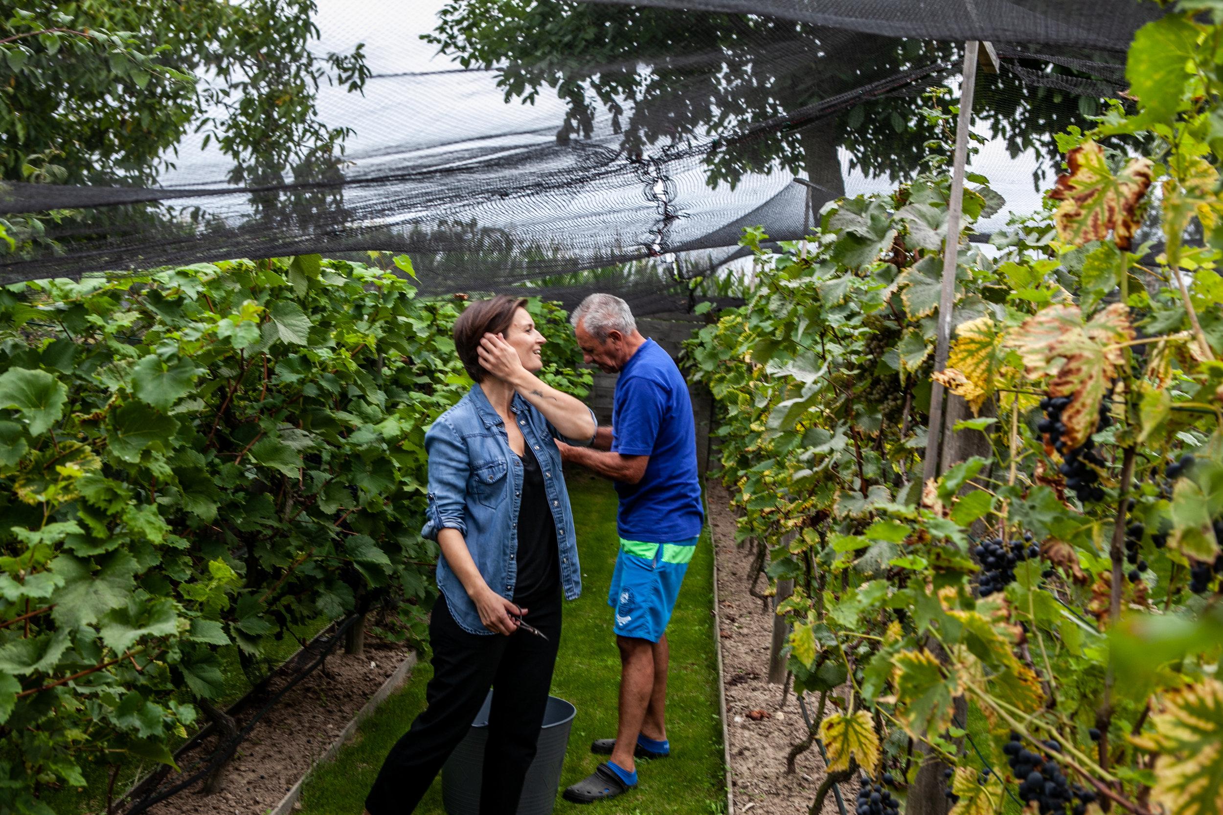 Mijn vader en ik in zijn wijngaard, elk jaar oogsten we de druiven en bottelen we de oogst van het vorige jaar.