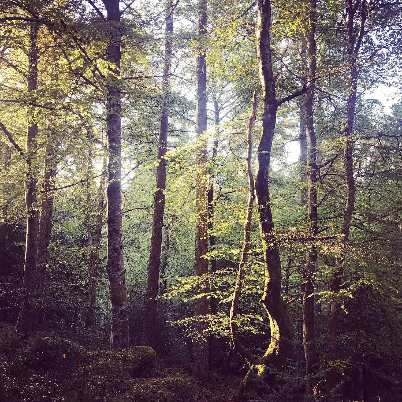 evanton-woods.jpg