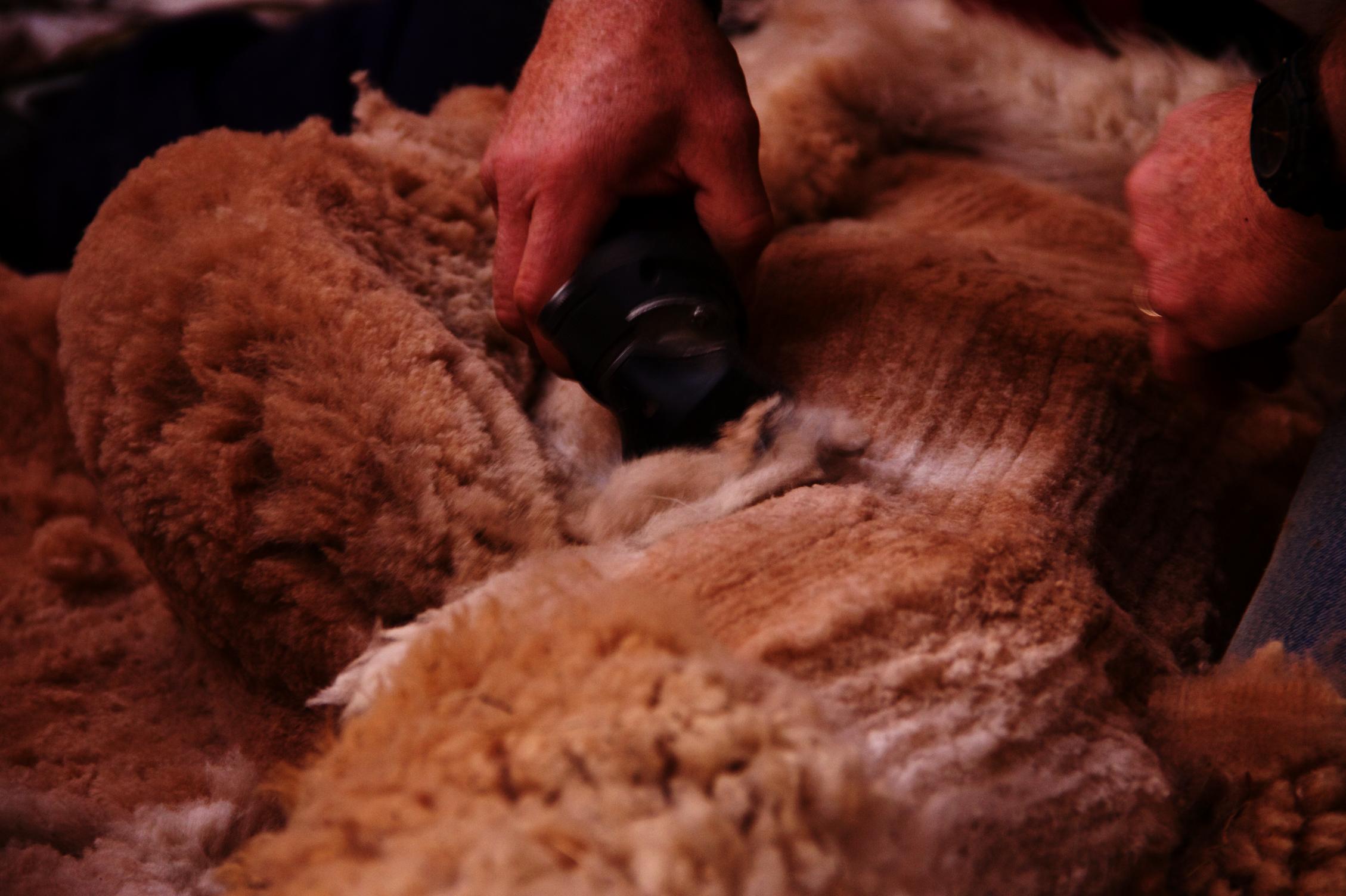 More fleece
