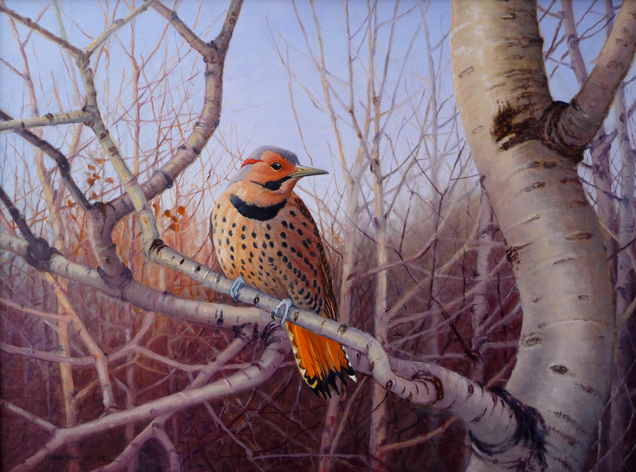 Red Shafted Flicker and Popples