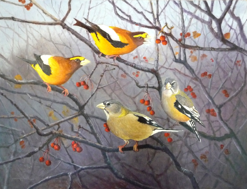 Easy Pickins (Evening Grosbeaks)