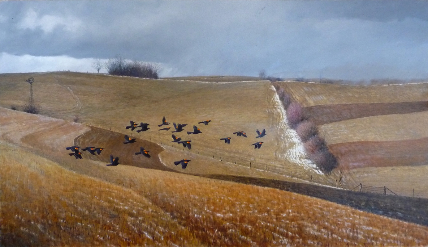 Male Redwings Coming North  oil on board 25 x 39 $2,200