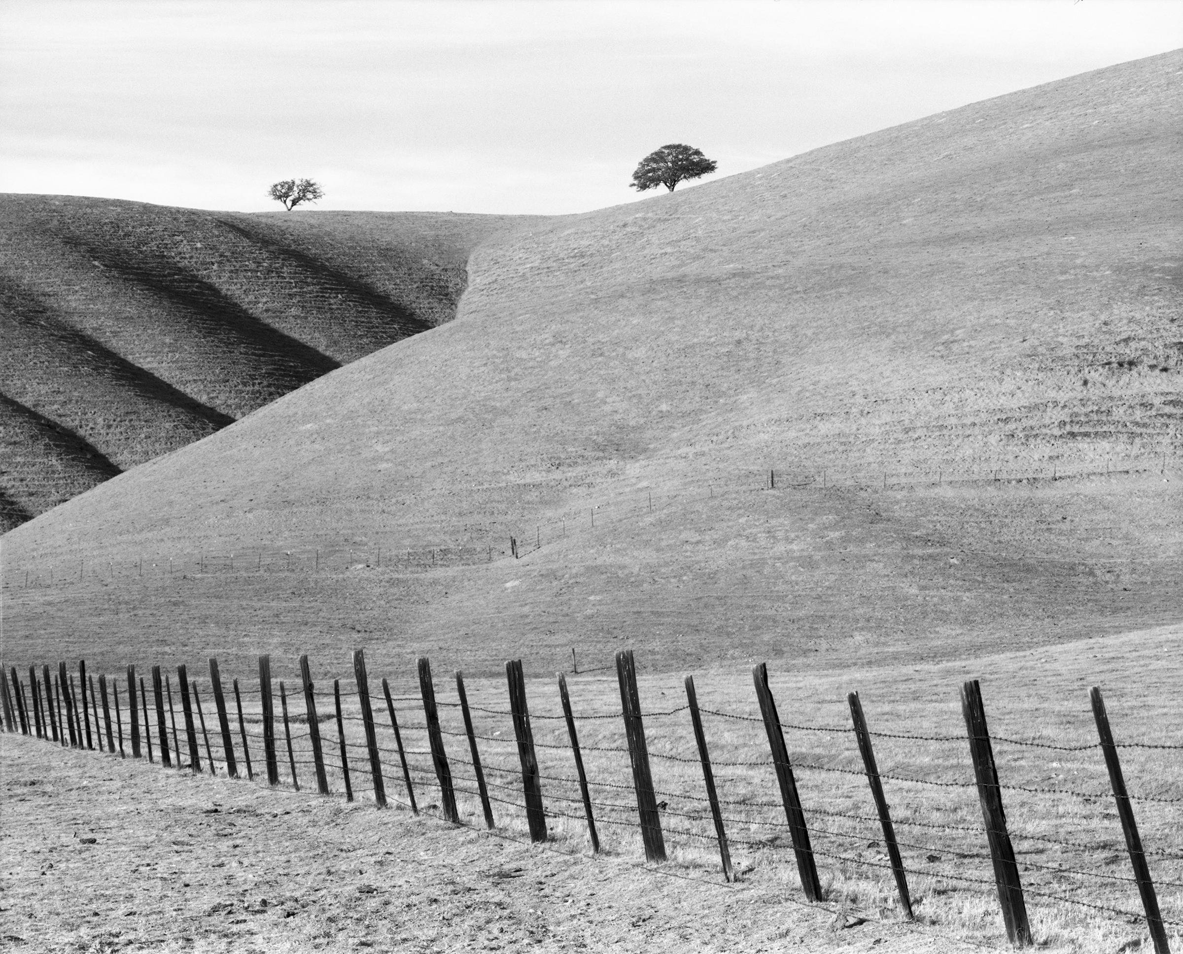 William Lemke - Fence Line and Two Trees along Hwy 25, California