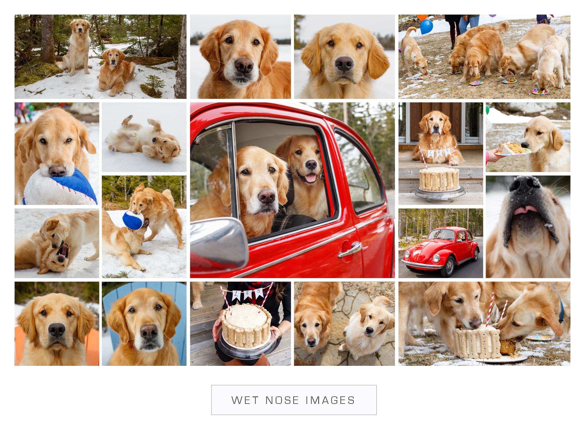 dog_birthday_party.jpg