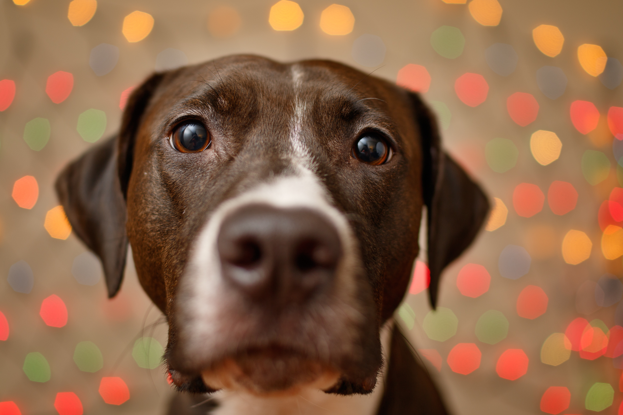 dog_bokeh_photographer.jpg