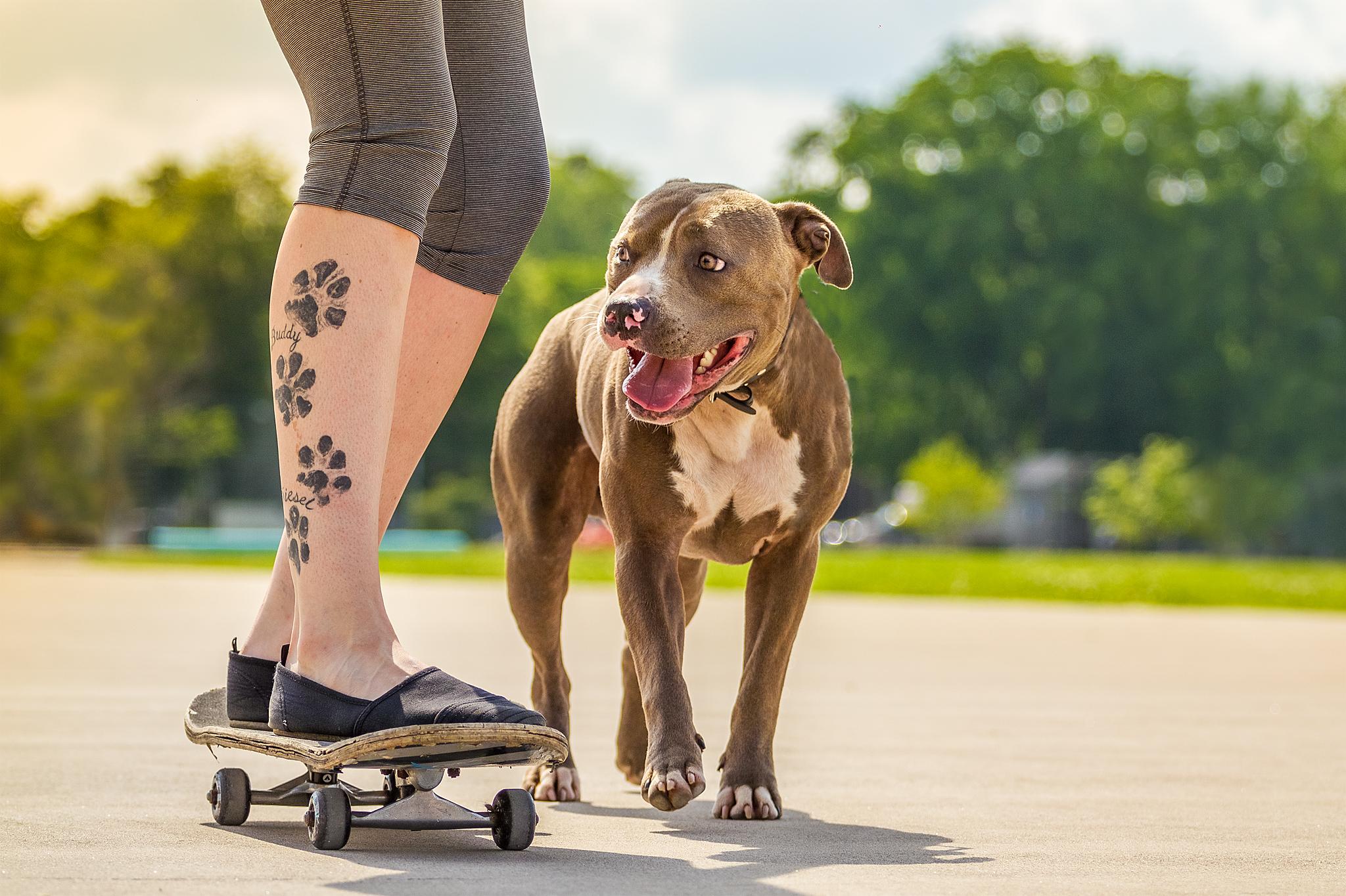 dog_tattoo_pibble_halifax.jpg