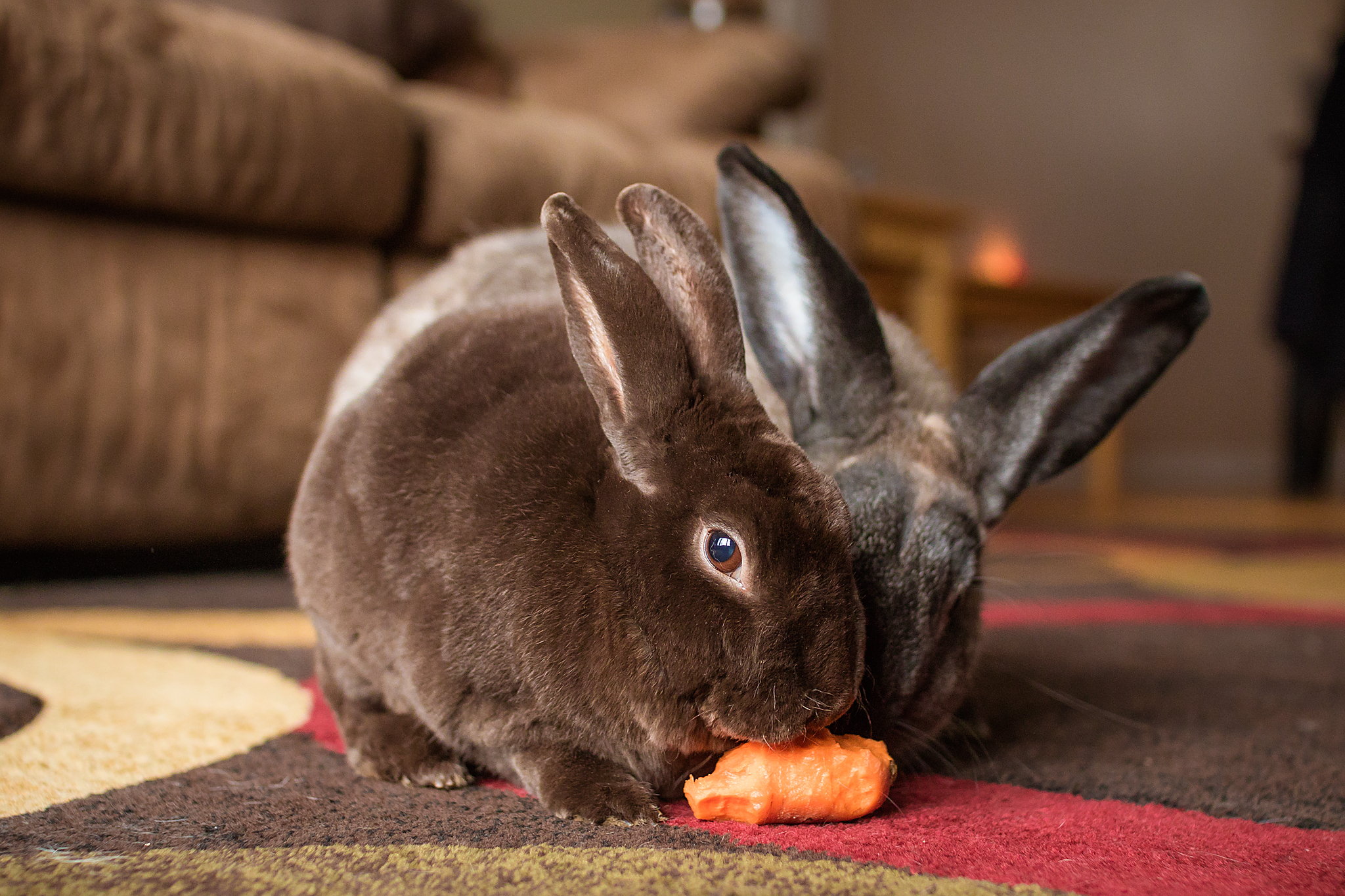 10000_carrots_rabbit_rescue.jpg