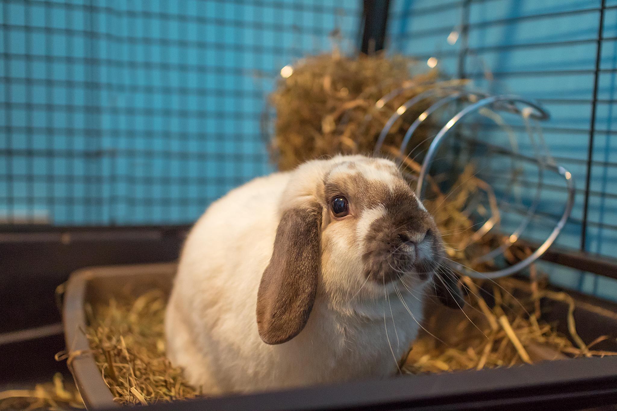bunny_photos.jpg