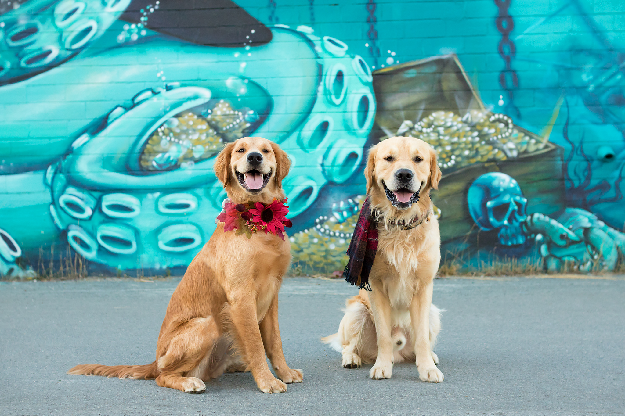 golden_retriever_halifax_photography.jpg