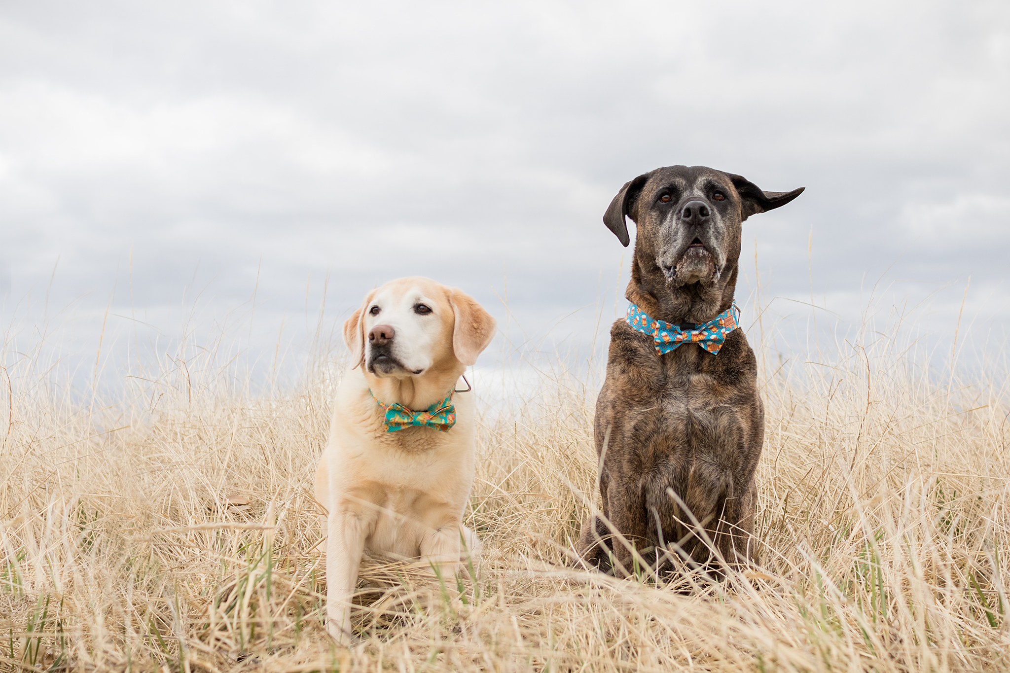 Goober Dog Collars