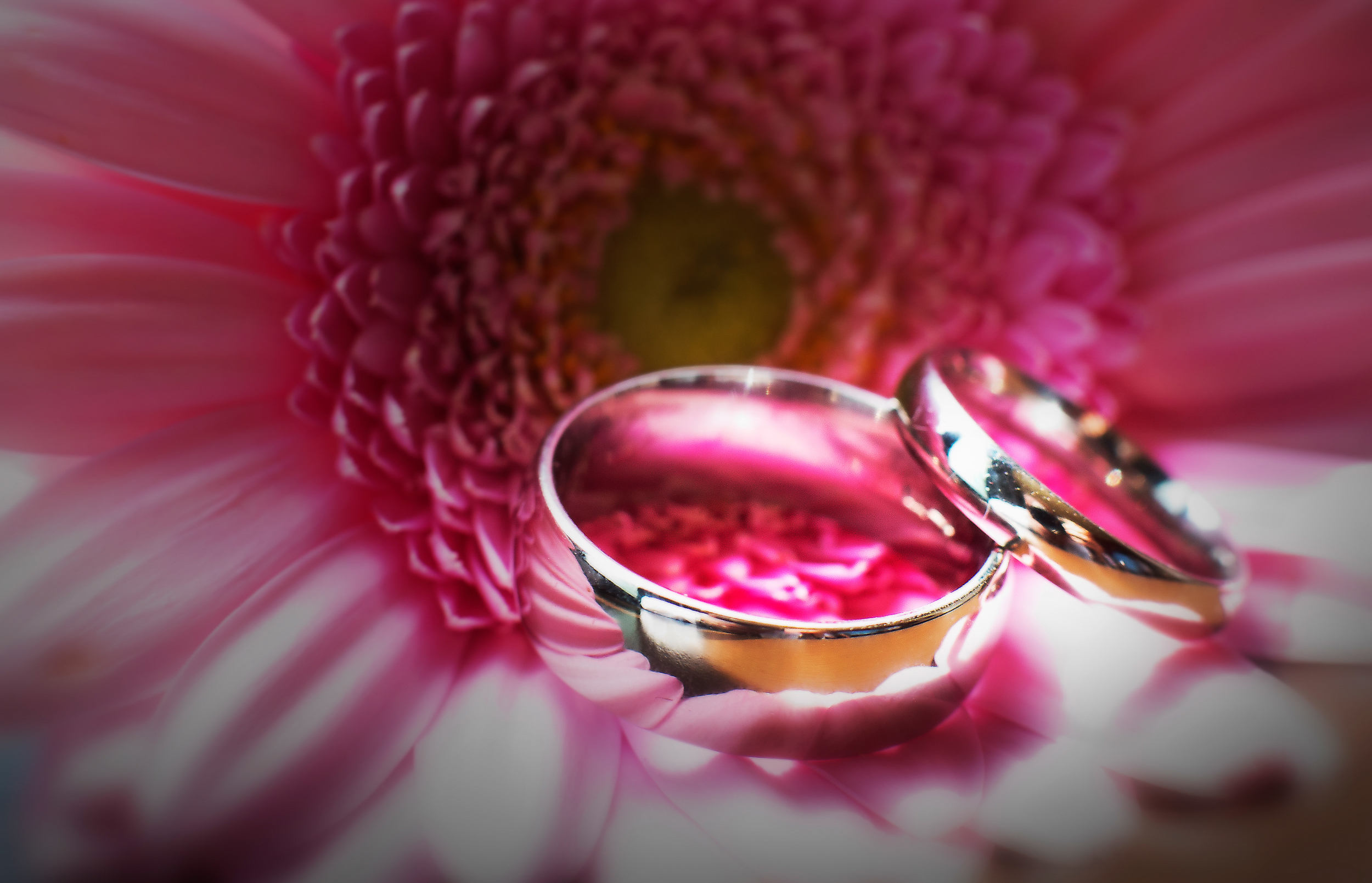 wedding-ring-shot-macro-pink-london-uk-destination-wedding-photography-Adam-Rowley