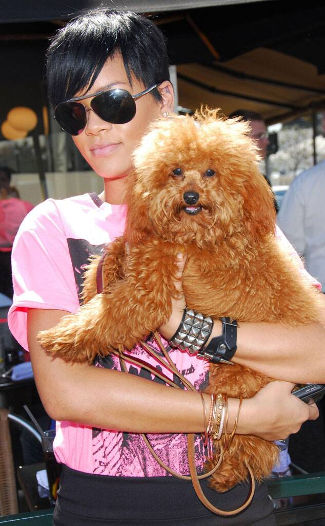 Rihanna and pet Oliver Pampered Pets and their Famous Owners.jpg