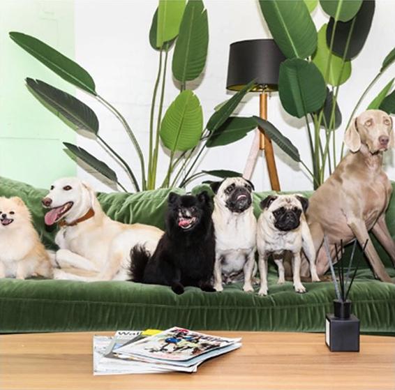 Image by Doggo Style Market