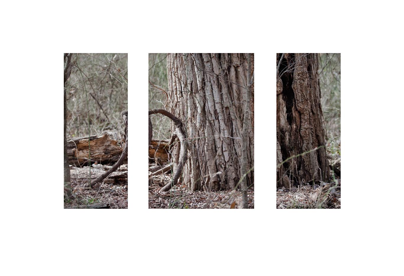 treeburn triptych sharpweb.jpg