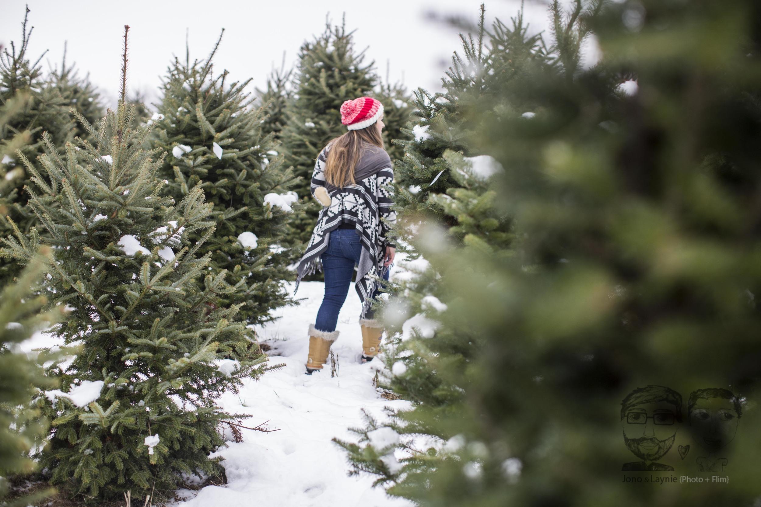 Tozer Christmas025.jpg