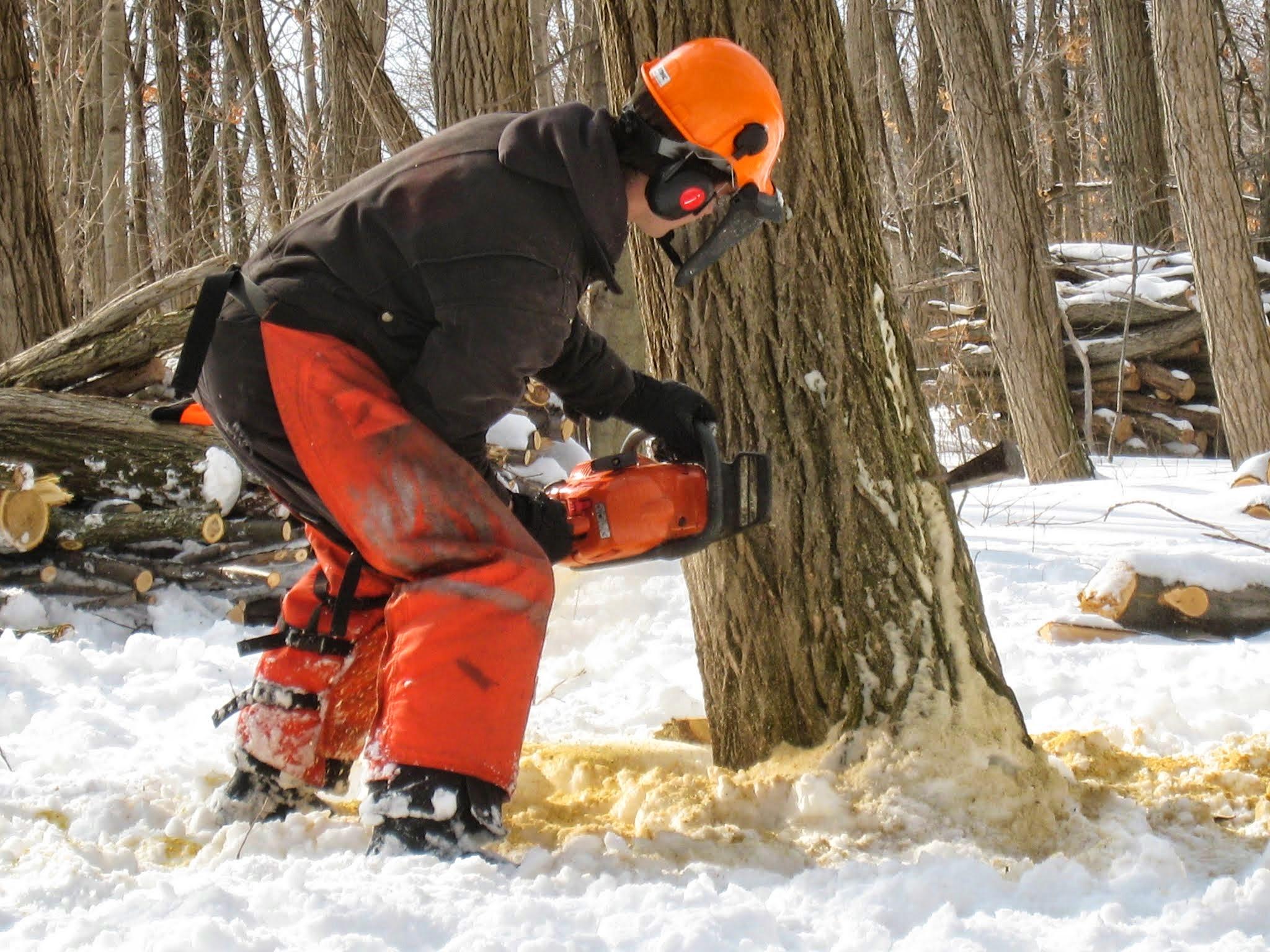 Tree felling work