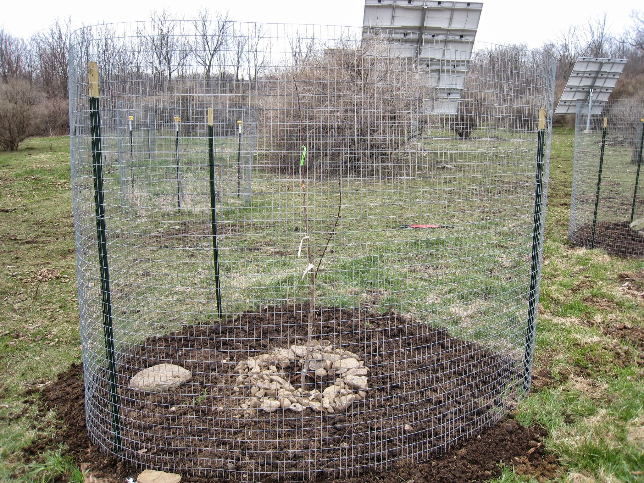 Orchard Installation
