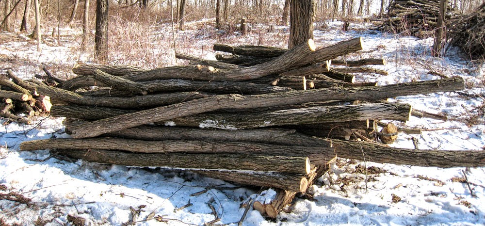 Black Locust Posts