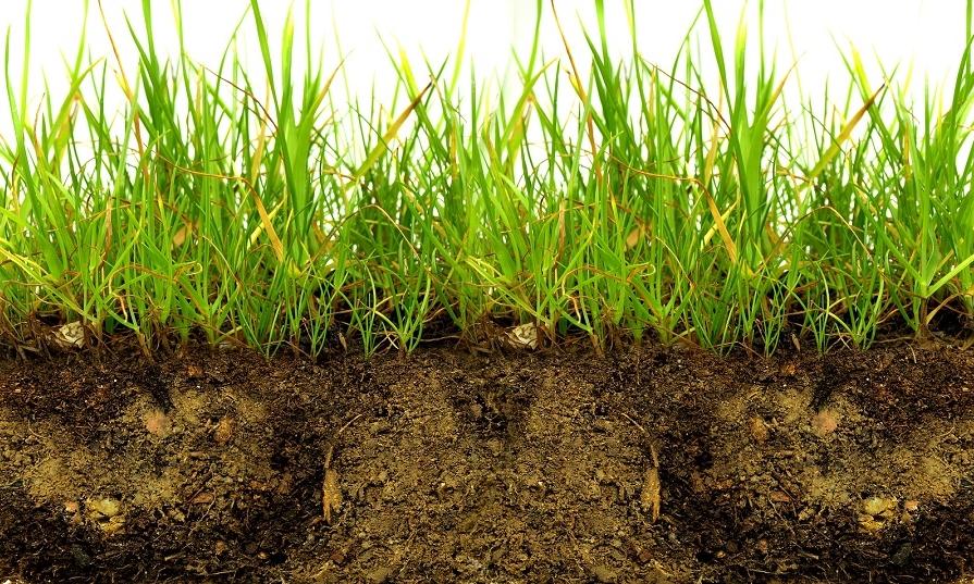 The largest database of regional soil samples