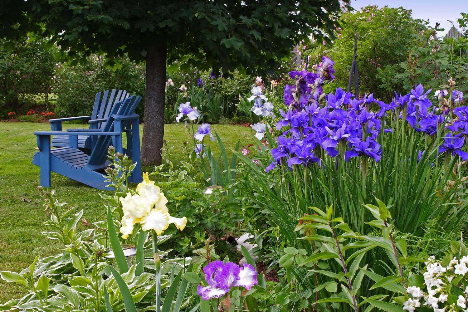 Your lawn is an integral part of your landscape