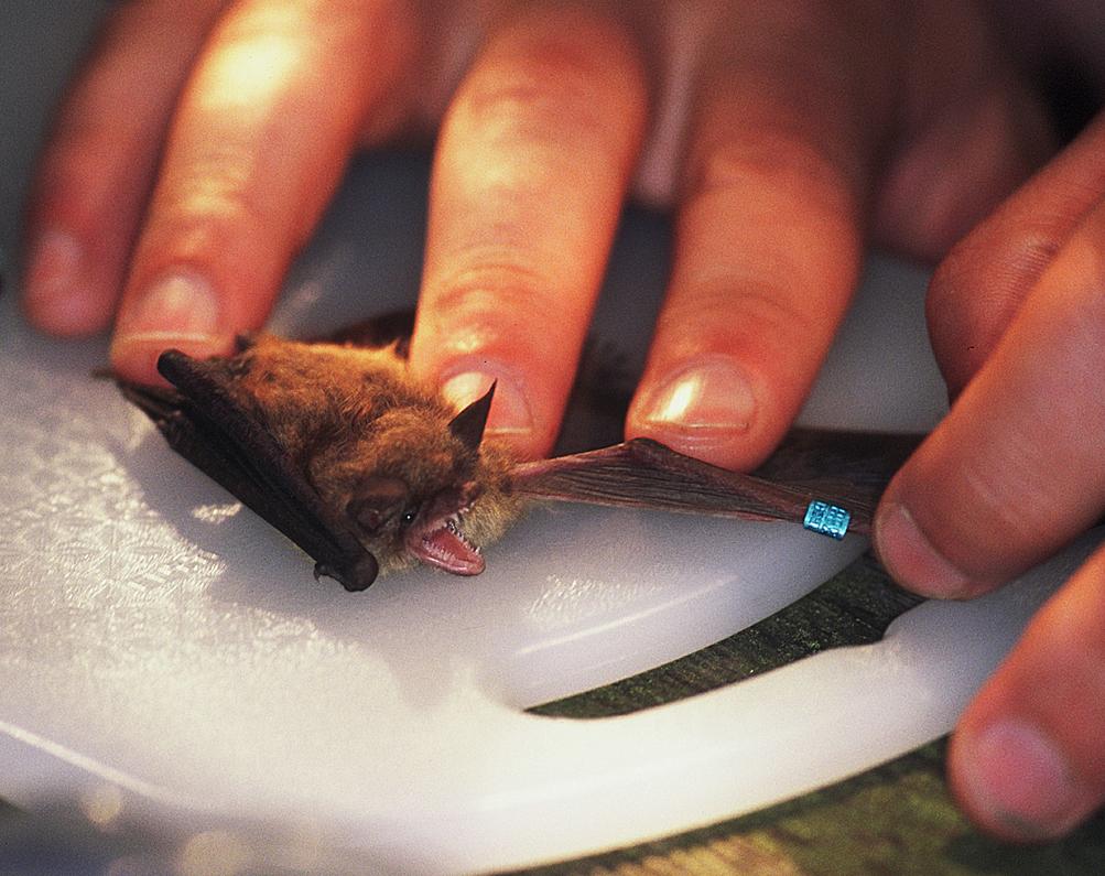 Bat Study in the Smokies ©FitzPatrick016 copy.jpg