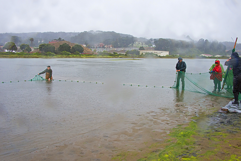 A the Golden Gate National Park Bio Blitz in 2014.jpg
