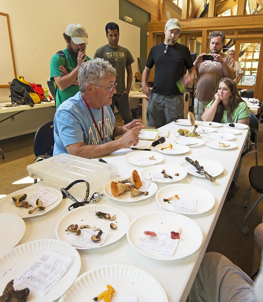 Scientist Studying Mushrooms in the Smokies.jpg