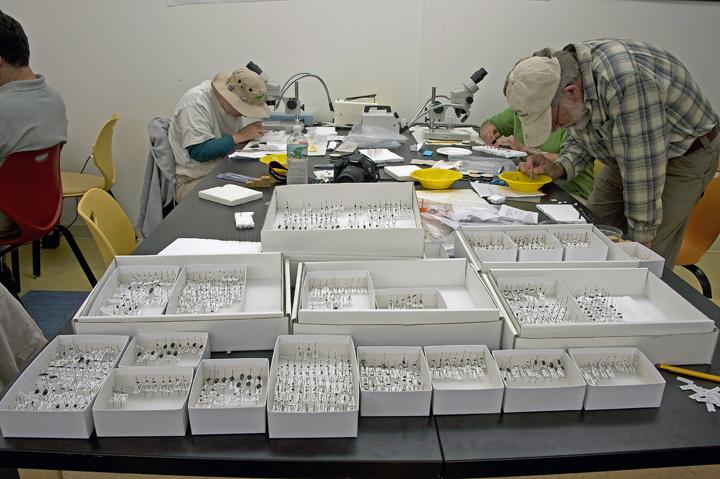 Studying beetles at the Acadia National Park Bio Blitz.jpg