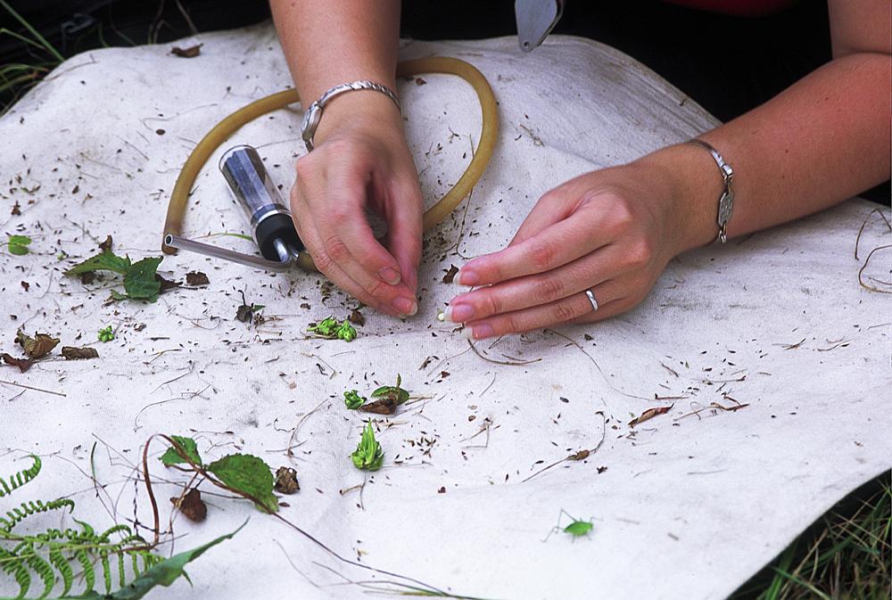 Volunteer collecting spiders in GSMNP copy 3.jpg