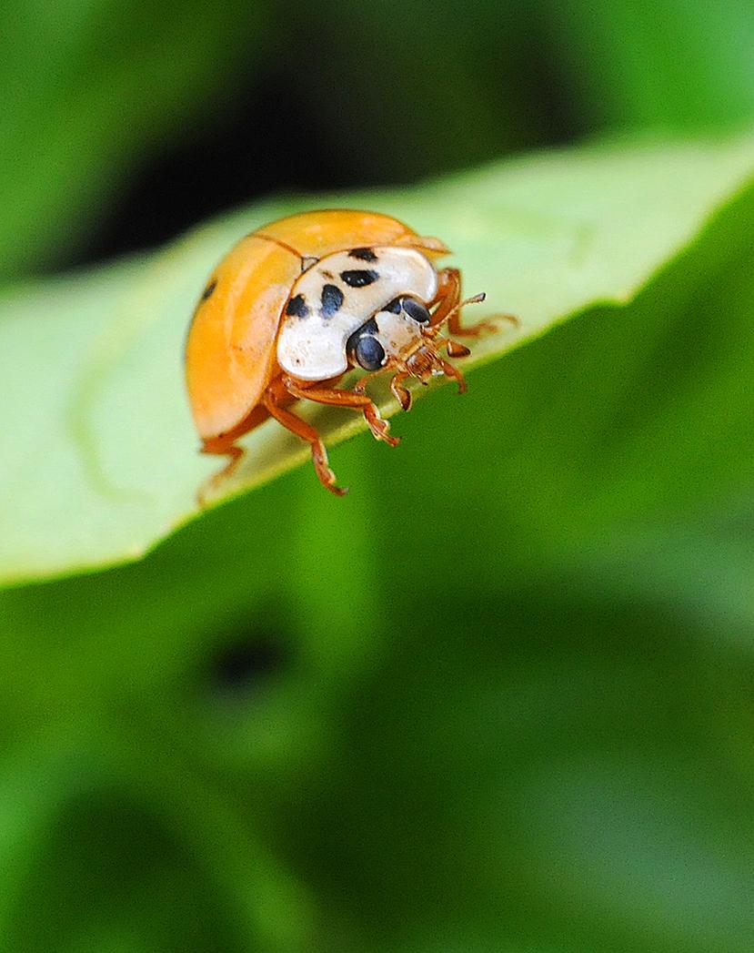 A Lady Bug.jpg