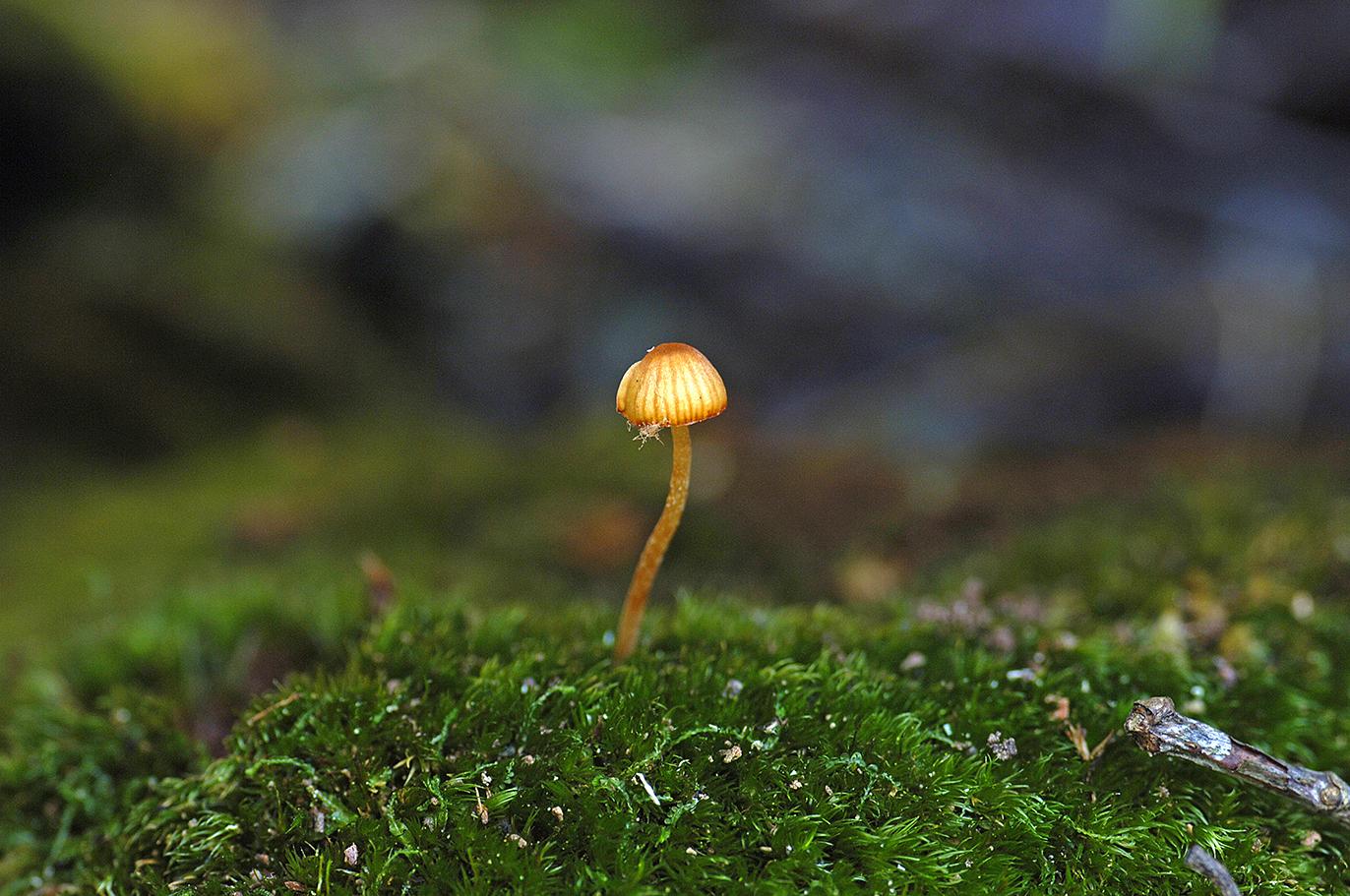 A mushroom in moss.jpg