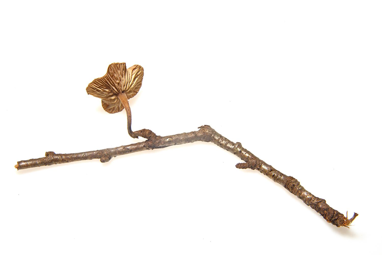 Mushroom on a twig .jpg