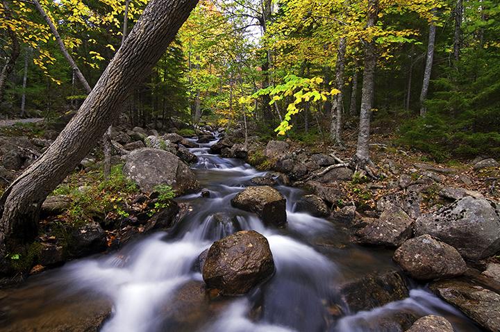 Stream in Acadia National Park ©FitzPatrick_007 copy.jpg
