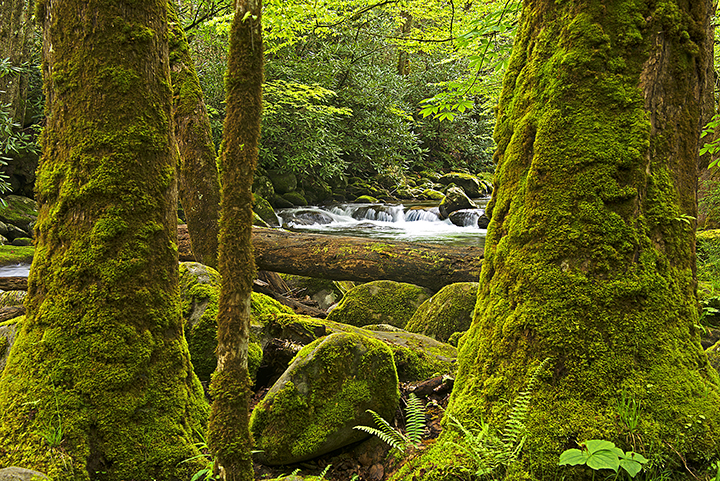 Stream on the Middlle Fork in the Smokies ©FitzPatrick_009 copy.jpg