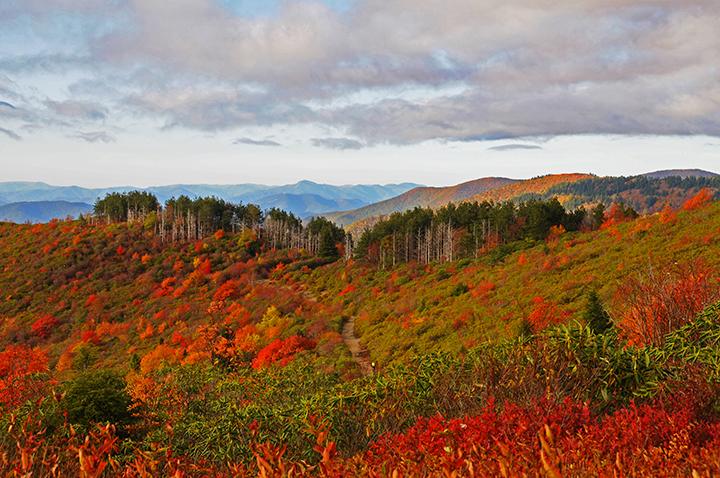 View on the Blue Ridge Parkway ©FitzPatrick_010 copy.jpg