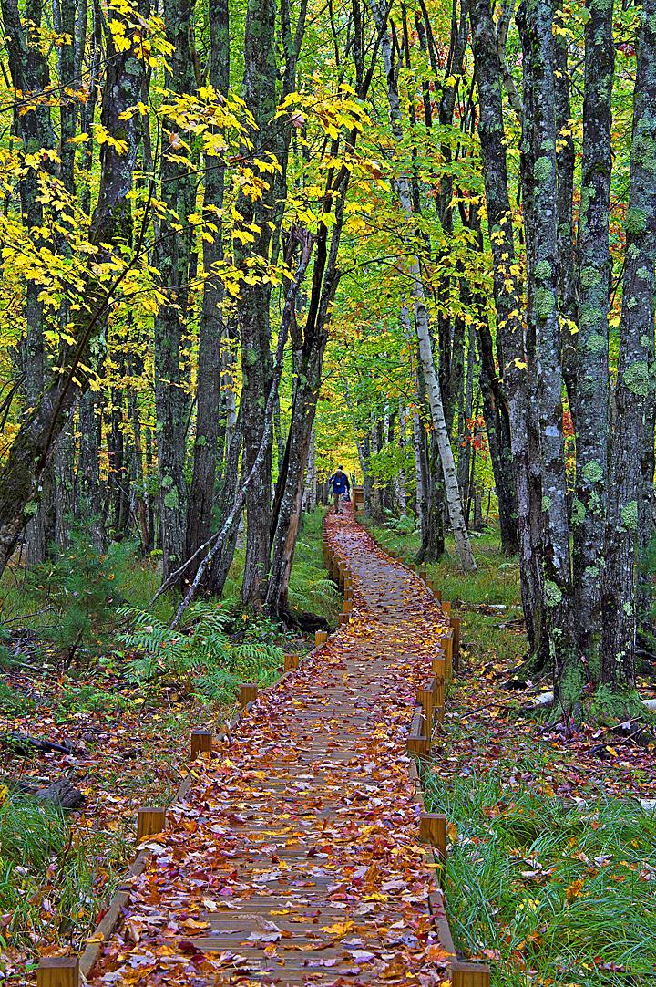 Trail in Acadia National Park ©FitzPatrick_011 copy.jpg