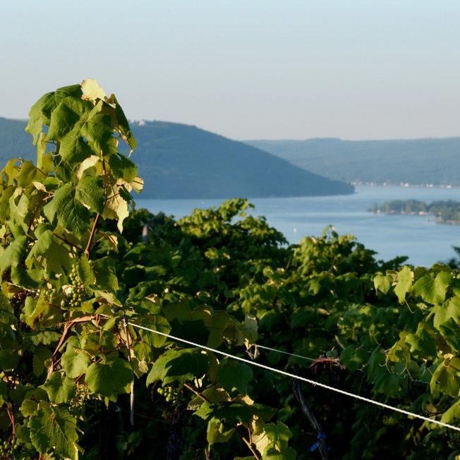 Finger Lakes -