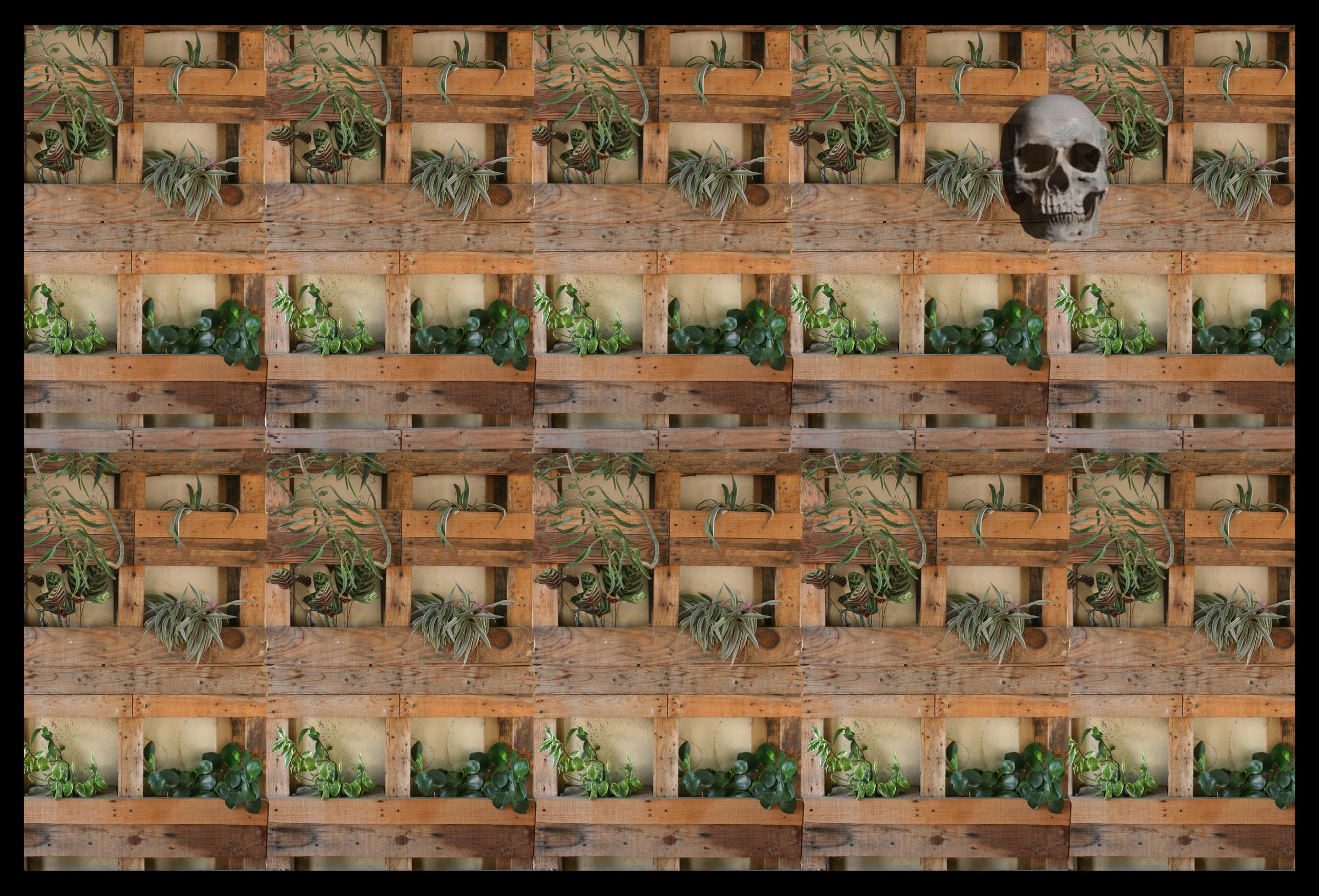 Sept 28 Plant Wall Skull.jpg
