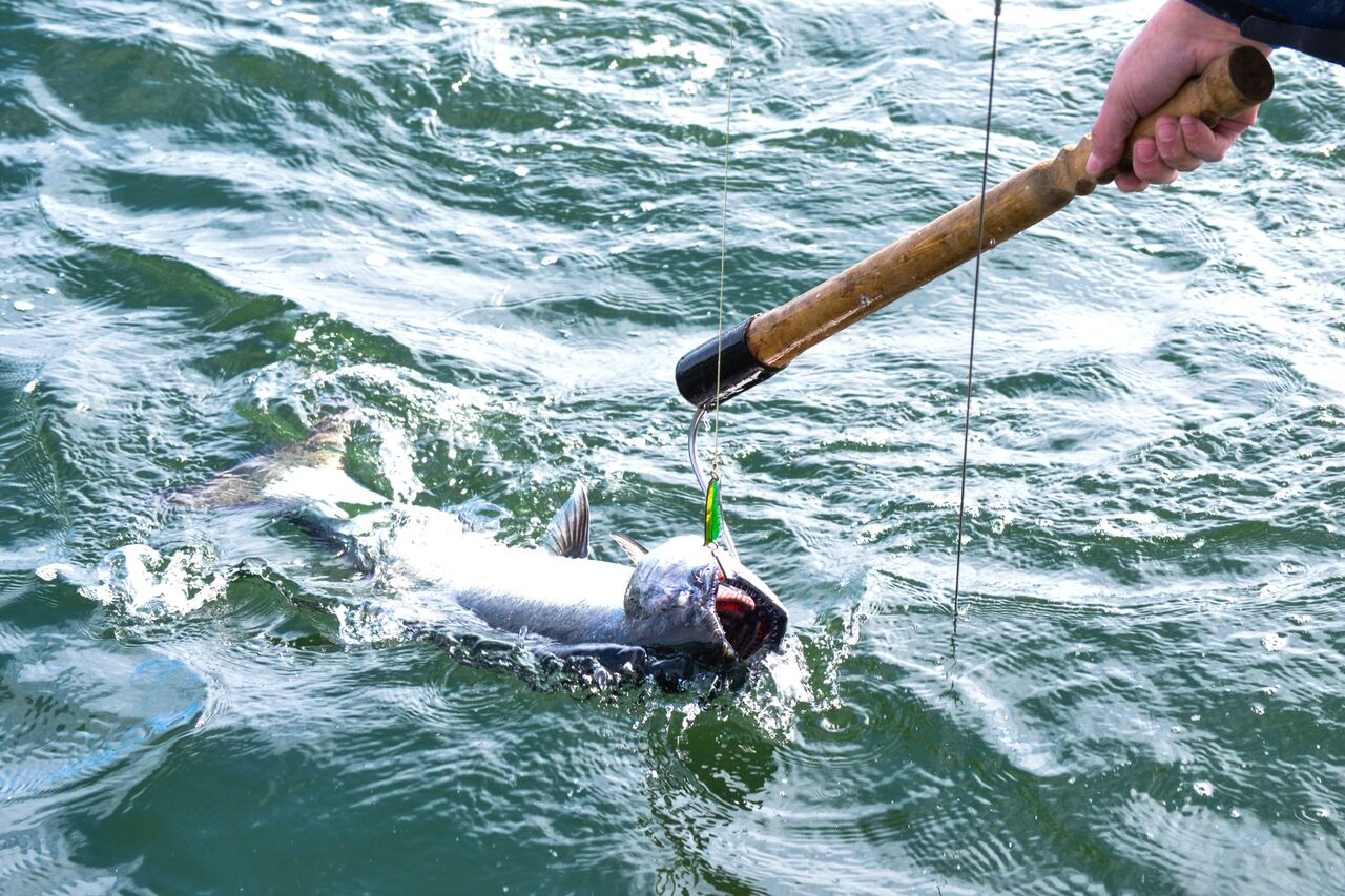 Fish being hooked.jpg
