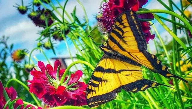 #transformation #butterfly