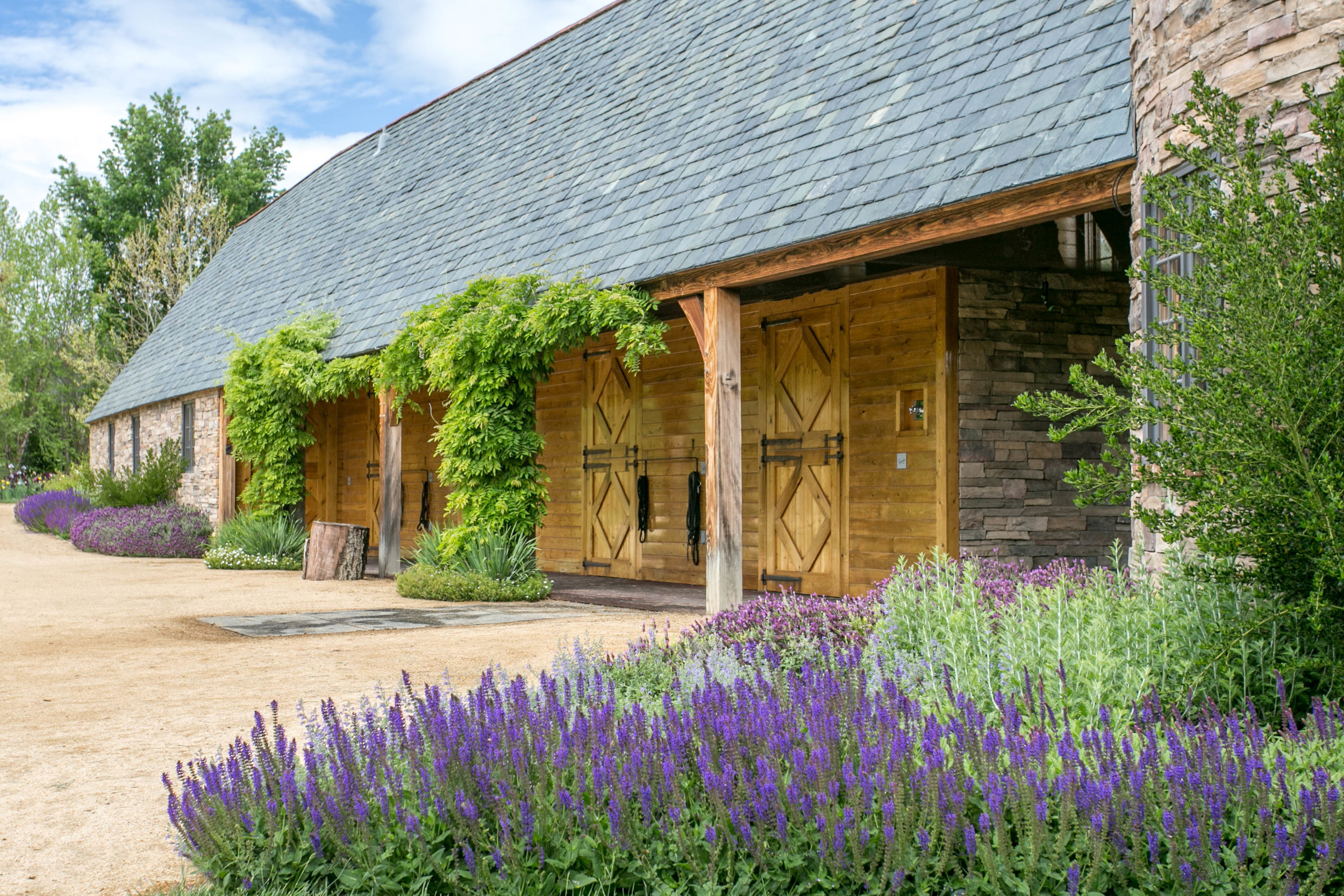 Spanish Lavender, Russian Sage , Salvia and Wisteria adorn the stable