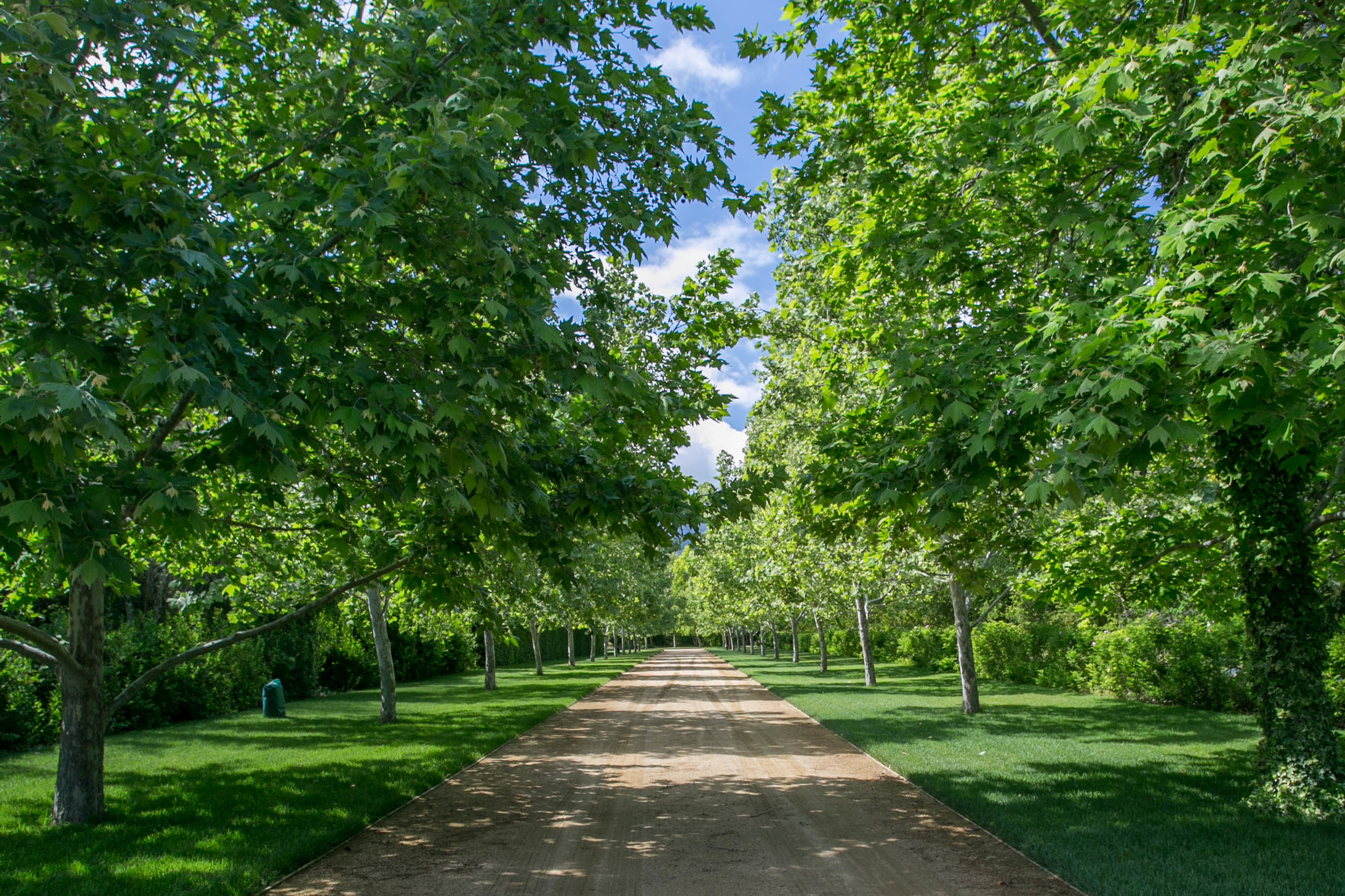 The Sycamore lined allee leads from the house to the stable. It is bordered on the left by the Hornbeam hedged Kitchen Garden and on the right by a Rosa Rugosa hedge and the wood.
