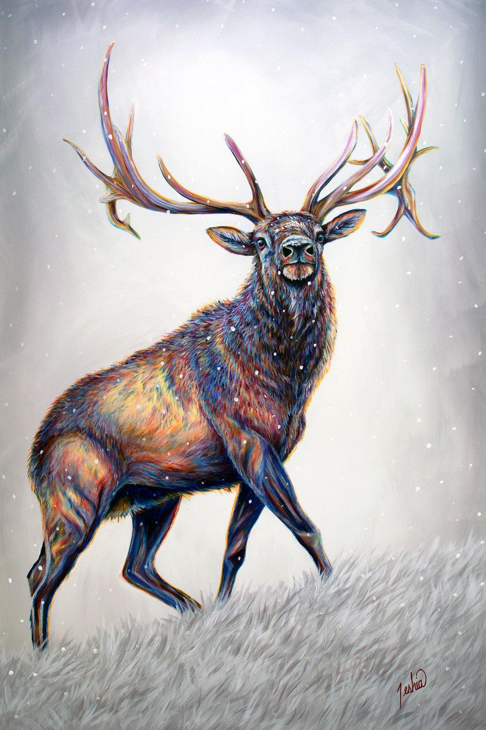 Elk & Deer