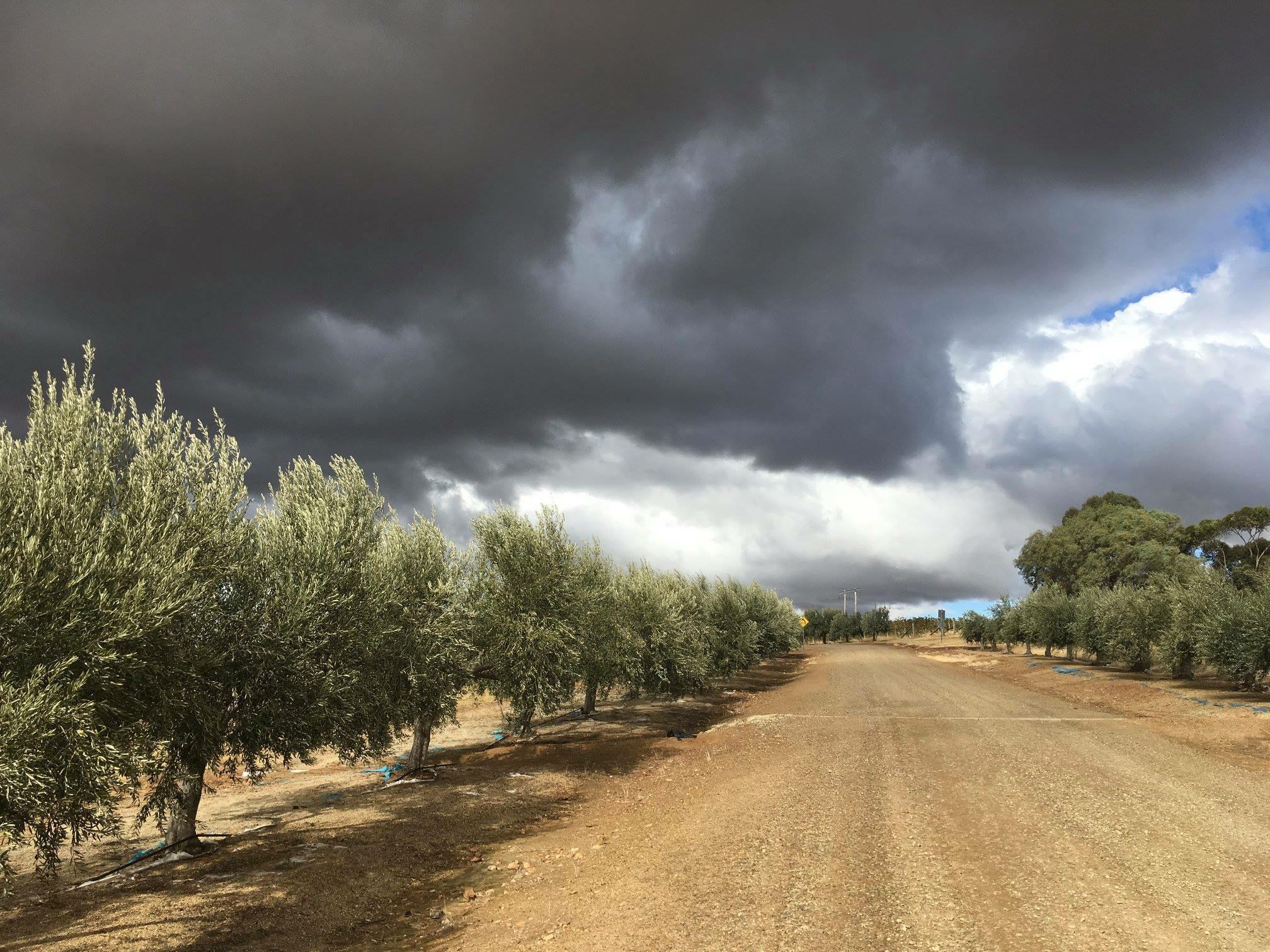 Cloudy Driveway.JPG