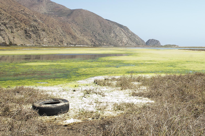 Tire in Moss