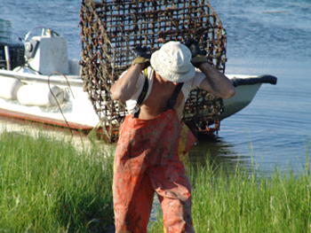 Tiverton resident and aquaculturist Chris Clarendon schleps an oyster cage from his boat to his pickup parked along Fogland Beach. (Frank Carini/ecoRI News)